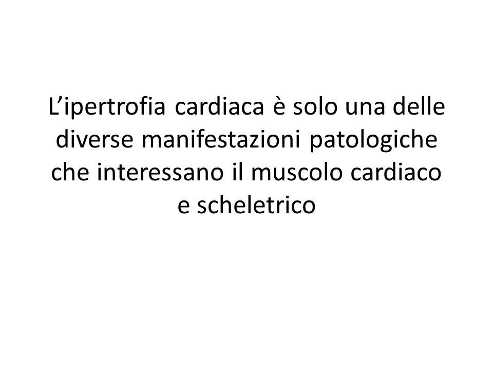 Lipertrofia cardiaca è solo una delle diverse manifestazioni patologiche che interessano il muscolo cardiaco e scheletrico