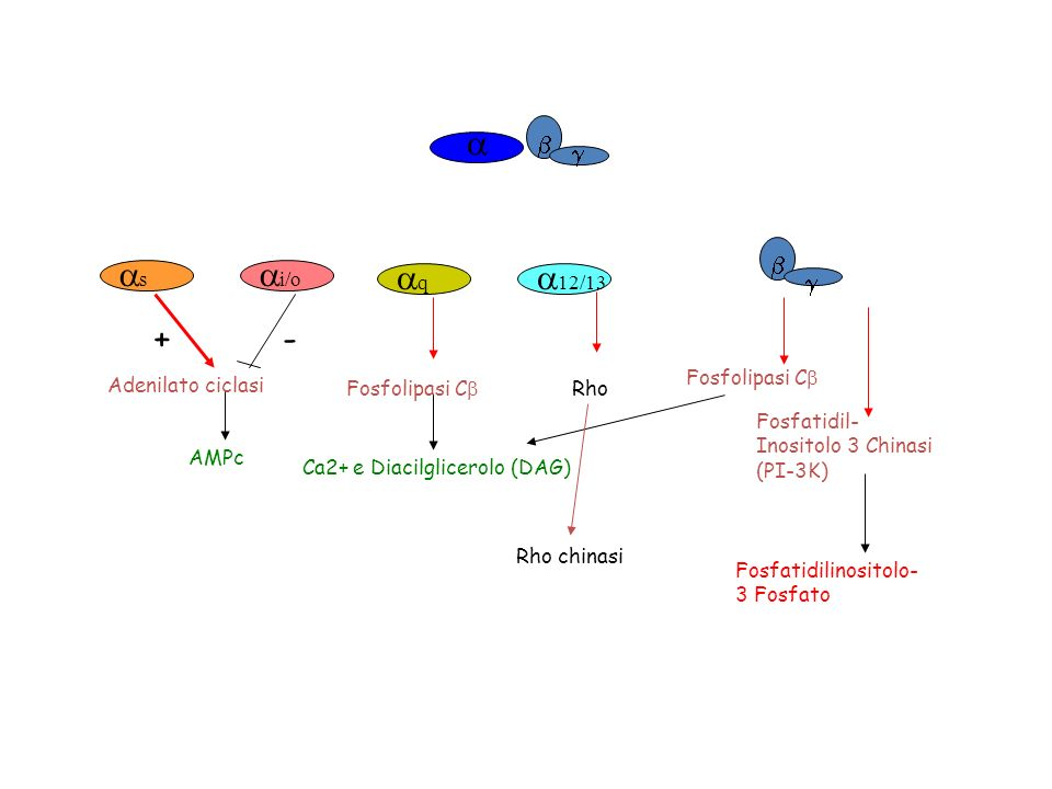 12/13 s i/o Adenilato ciclasi AMPc +- q Fosfolipasi C Ca2+ e Diacilglicerolo (DAG) Rho Fosfolipasi C Fosfatidilinositolo- 3 Fosfato Fosfatidil- Inosit