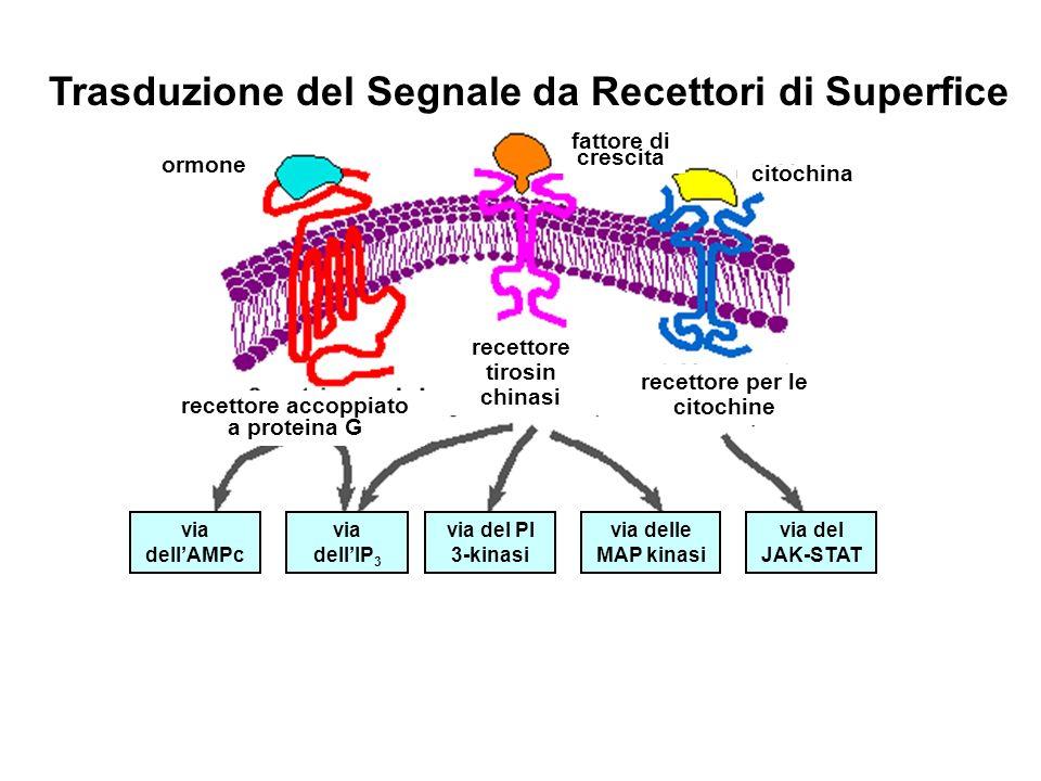 Trasduzione del Segnale da Recettori di Superfice ormone citochina fattore di crescita recettore accoppiato a proteina G recettore tirosin chinasi rec