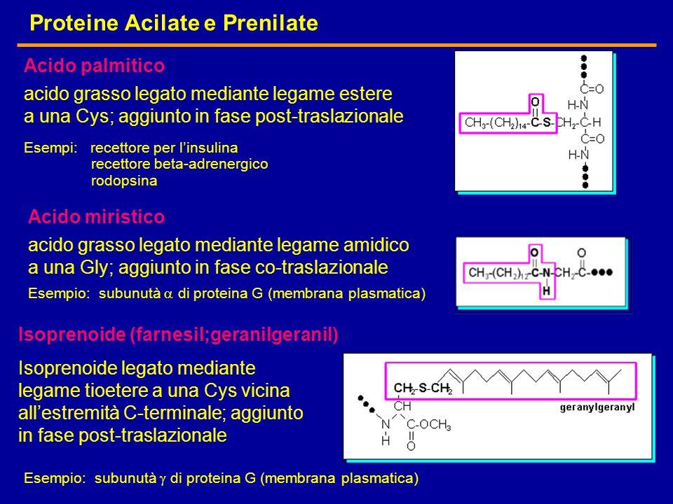 Proteine Acilate e Prenilate acido grasso legato mediante legame estere a una Cys; aggiunto in fase post-traslazionale Esempi: recettore per linsulina