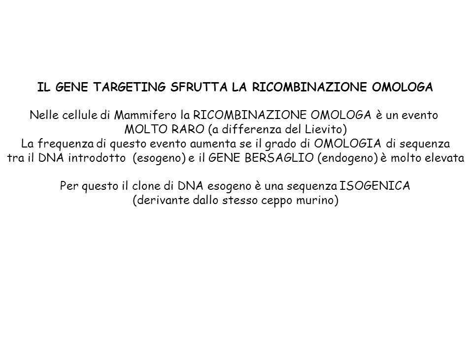 Nelle cellule di Mammifero la RICOMBINAZIONE OMOLOGA è un evento MOLTO RARO (a differenza del Lievito) La frequenza di questo evento aumenta se il gra
