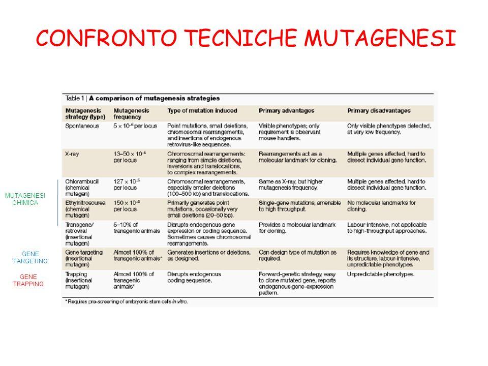 CONFRONTO TECNICHE MUTAGENESI GENE TRAPPING GENE TARGETING MUTAGENESI CHIMICA