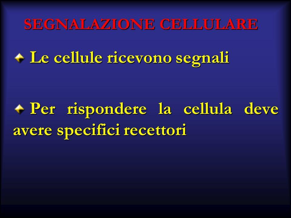 SEGNALAZIONE CELLULARE Le cellule ricevono segnali Le cellule ricevono segnali Per rispondere la cellula deve avere specifici recettori Per rispondere la cellula deve avere specifici recettori