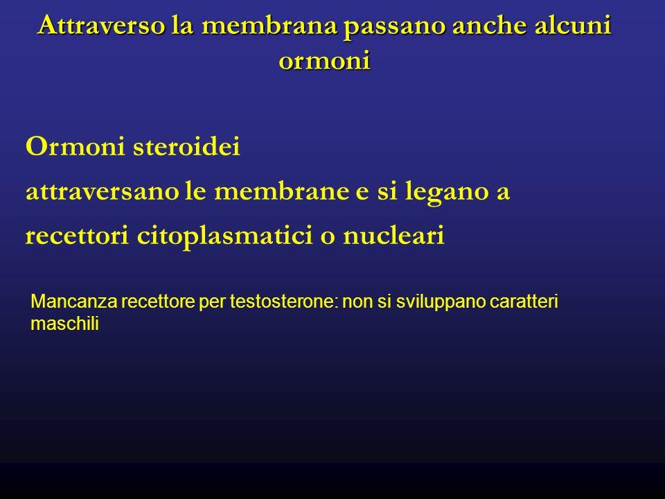 Attraverso la membrana passano anche alcuni ormoni Ormoni steroidei attraversano le membrane e si legano a recettori citoplasmatici o nucleari Mancanza recettore per testosterone: non si sviluppano caratteri maschili
