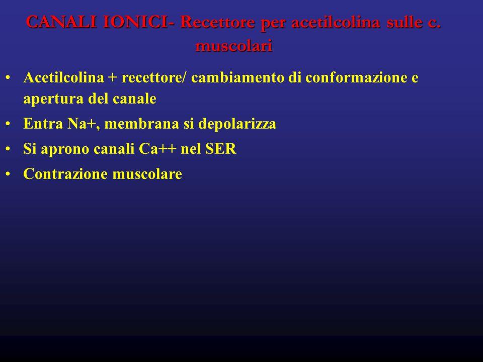 CANALI IONICI- Recettore per acetilcolina sulle c.