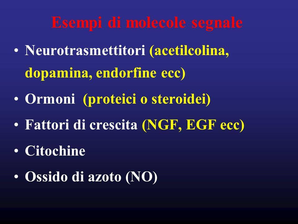 Esempi di molecole segnale Neurotrasmettitori (acetilcolina, dopamina, endorfine ecc) Ormoni (proteici o steroidei) Fattori di crescita (NGF, EGF ecc) Citochine Ossido di azoto (NO)