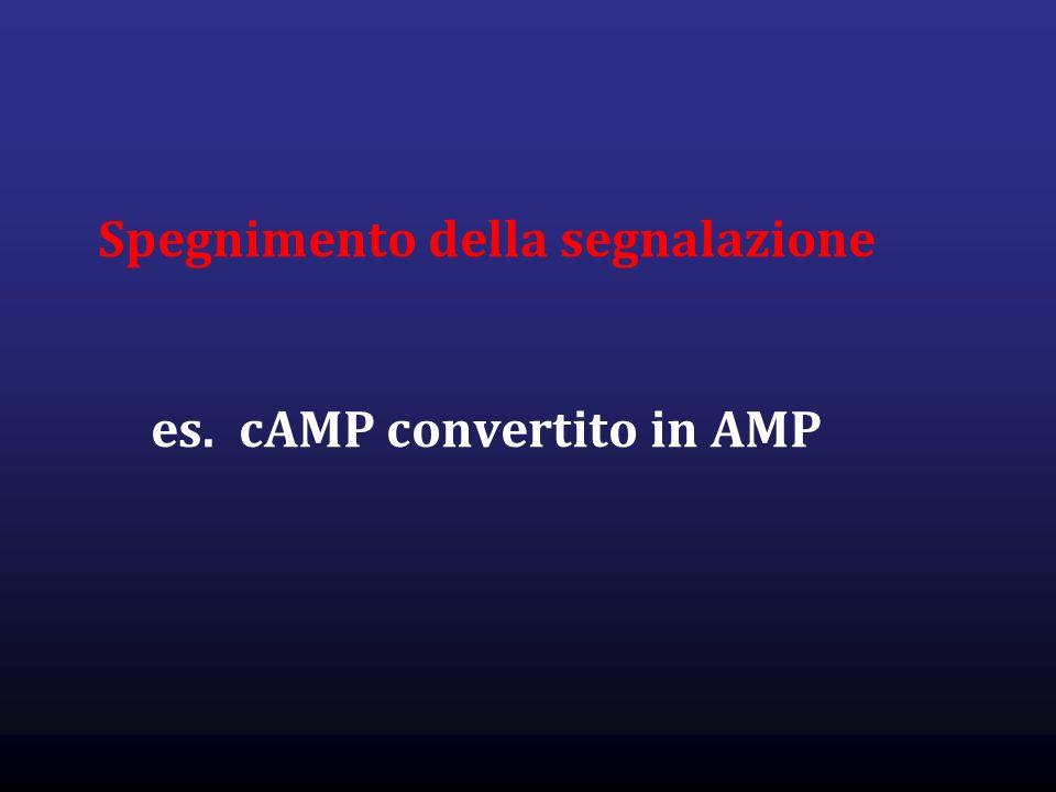 Spegnimento della segnalazione es. cAMP convertito in AMP