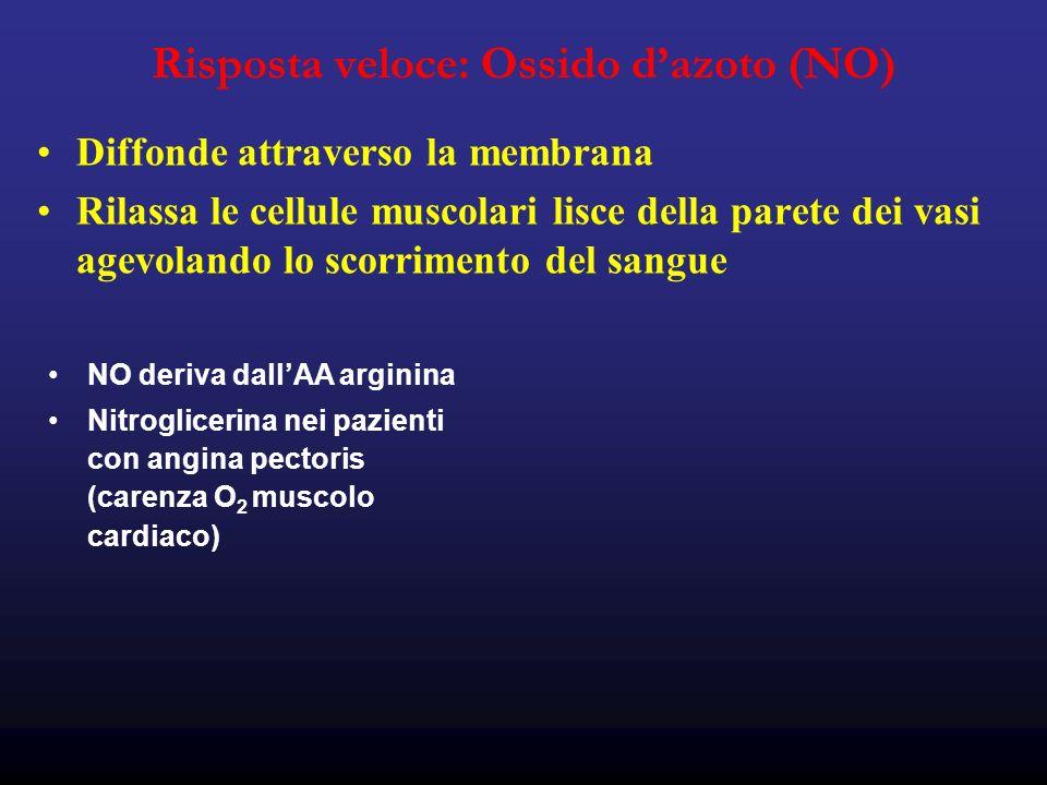Risposta veloce: Ossido dazoto (NO) Diffonde attraverso la membrana Rilassa le cellule muscolari lisce della parete dei vasi agevolando lo scorrimento del sangue NO deriva dallAA arginina Nitroglicerina nei pazienti con angina pectoris (carenza O 2 muscolo cardiaco)