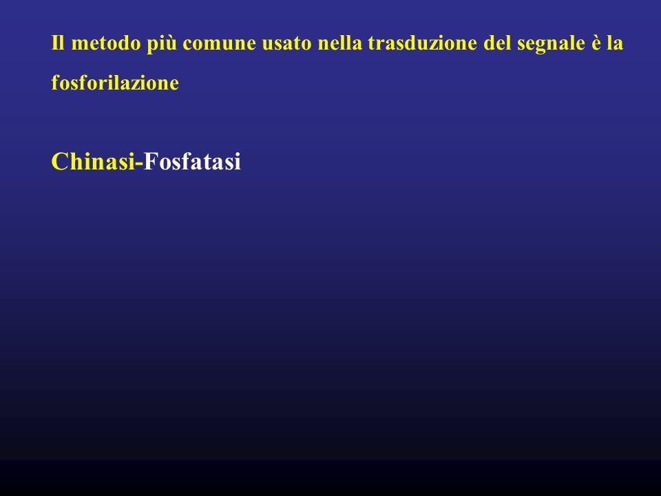 Il metodo più comune usato nella trasduzione del segnale è la fosforilazione Chinasi-Fosfatasi