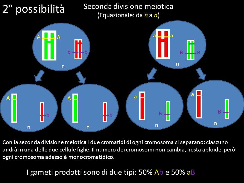 n n nn Seconda divisione meiotica (Equazionale: da n a n) Con la seconda divisione meiotica i due cromatidi di ogni cromosoma si separano: ciascuno an