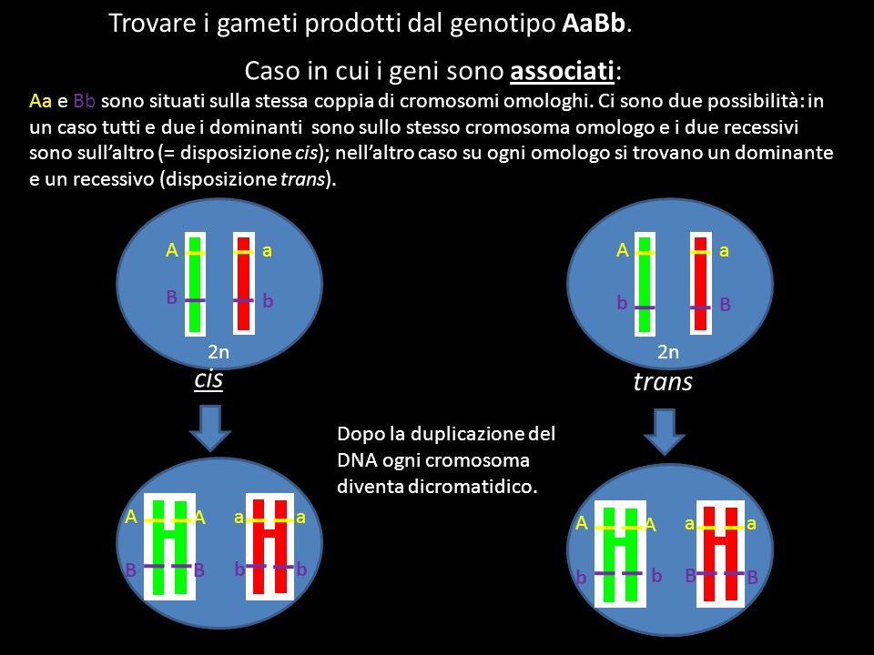 Trovare i gameti prodotti dal genotipo AaBb. 2n Aa Aa B B b b cis trans Caso in cui i geni sono associati: Aa e Bb sono situati sulla stessa coppia di