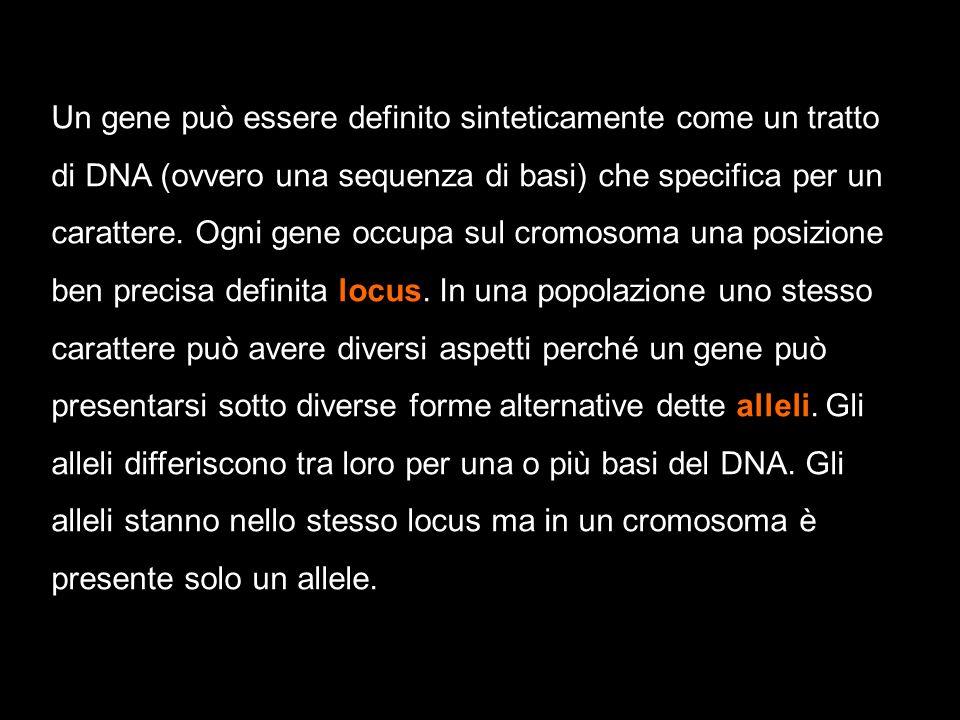 Un gene può essere definito sinteticamente come un tratto di DNA (ovvero una sequenza di basi) che specifica per un carattere. Ogni gene occupa sul cr