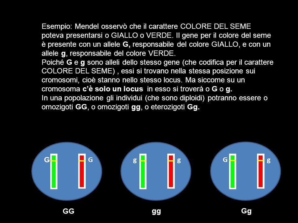 Esempio: Mendel osservò che il carattere COLORE DEL SEME poteva presentarsi o GIALLO o VERDE. Il gene per il colore del seme è presente con un allele
