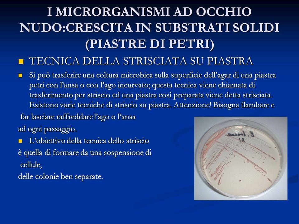 I MICRORGANISMI AD OCCHIO NUDO:CRESCITA IN SUBSTRATI SOLIDI (PIASTRE DI PETRI) TECNICA DELLA STRISCIATA SU PIASTRA TECNICA DELLA STRISCIATA SU PIASTRA