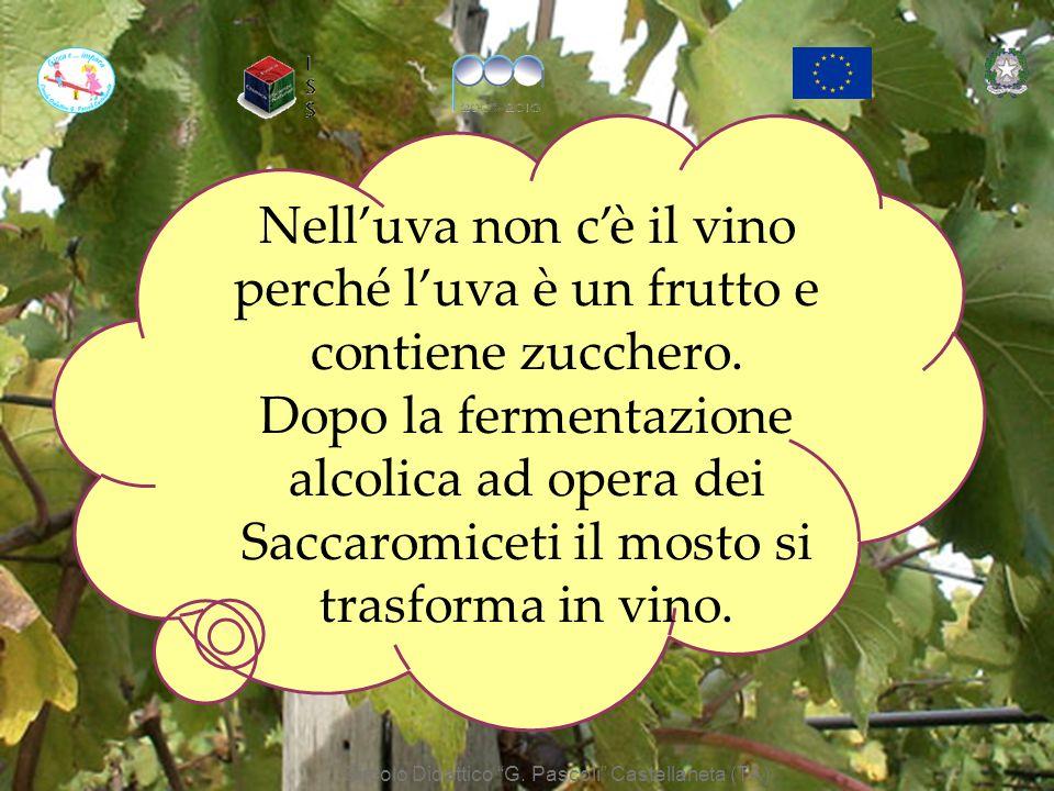 Nelluva non cè il vino perché luva è un frutto e contiene lo zucchero. Dopo la fermentazione alcolica il mosto si trasforma in vino. Nelluva non cè il