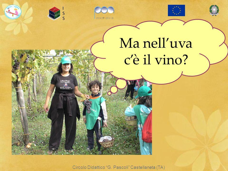 Circolo Didattico G. Pascoli Castellaneta (TA) Ma nelluva cè il vino?