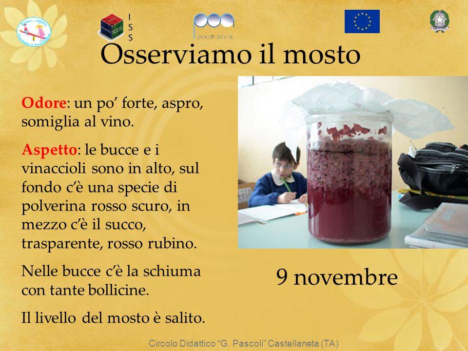 Circolo Didattico G. Pascoli Castellaneta (TA) Osserviamo il mosto Odore: un po forte, aspro, somiglia al vino. Aspetto: le bucce e i vinaccioli sono