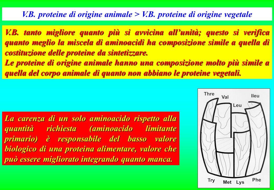 N fecale = N di origine alimentare indigerito + N di costituzione degli enzimi digestivi, degli acidi biliari, degli epiteli di sfaldamento del canale
