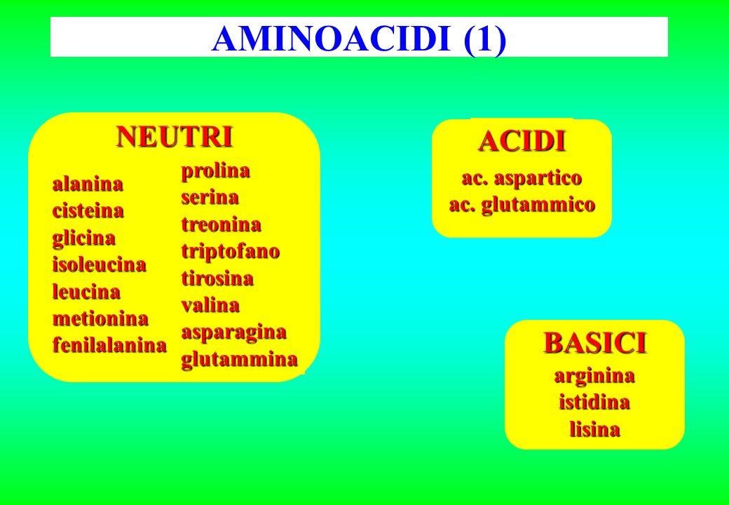AMINOACIDI (1) prolinaserinatreoninatriptofanotirosinavalinaasparaginaglutammina alaninacisteinaglicinaisoleucinaleucinametioninafenilalanina NEUTRI ACIDI ac.