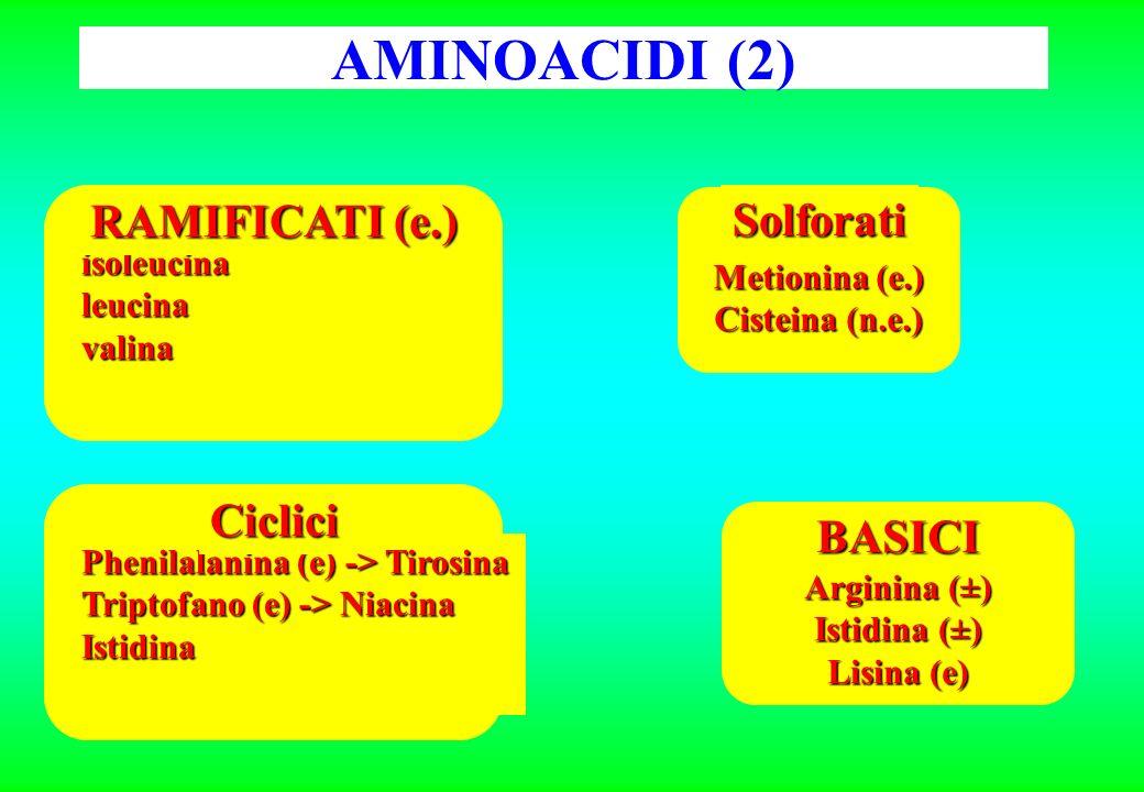 AMINOACIDI (2) isoleucinaleucinavalina RAMIFICATI (e.) Solforati Metionina (e.) Cisteina (n.e.) BASICI Arginina (±) Istidina (±) Lisina (e) Phenilalanina (e) -> Tirosina Triptofano (e) -> Niacina Istidina Ciclici