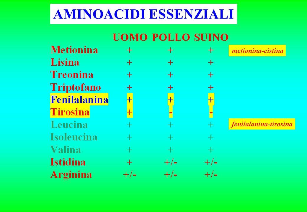 AMINOACIDI (2) isoleucinaleucinavalina RAMIFICATI (e.) Solforati Metionina (e.) Cisteina (n.e.) BASICI Arginina (±) Istidina (±) Lisina (e) Phenilalan