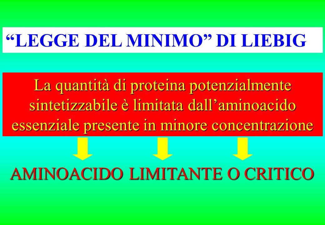 LEGGE DEL MINIMO DI LIEBIG AMINOACIDO LIMITANTE O CRITICO La quantità di proteina potenzialmente sintetizzabile è limitata dallaminoacido essenziale presente in minore concentrazione