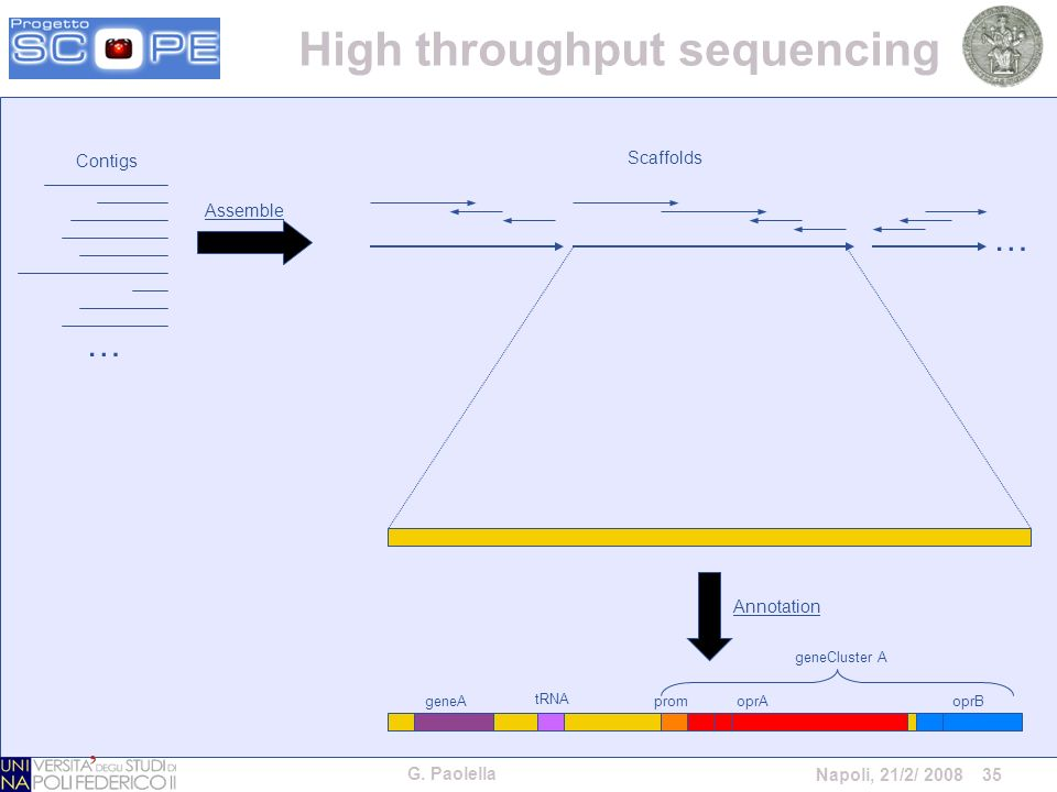 G. Paolella Napoli, 21/2/ 2008 35 Assemble … Contigs Scaffolds … geneA tRNA promoprAoprB geneCluster A Annotation High throughput sequencing