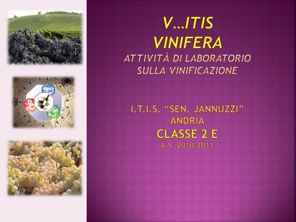 Four Mirr il vino delle 4 terre ITIS Sen.O.