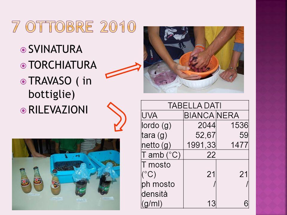 SVINATURA TORCHIATURA TRAVASO ( in bottiglie) RILEVAZIONI TABELLA DATI UVABIANCANERA lordo (g)20441536 tara (g)52,6759 netto (g)1991,331477 T amb (°C)