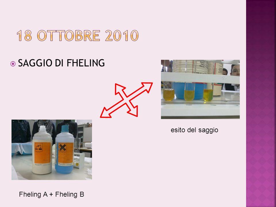 SAGGIO DI FHELING Fheling A + Fheling B esito del saggio