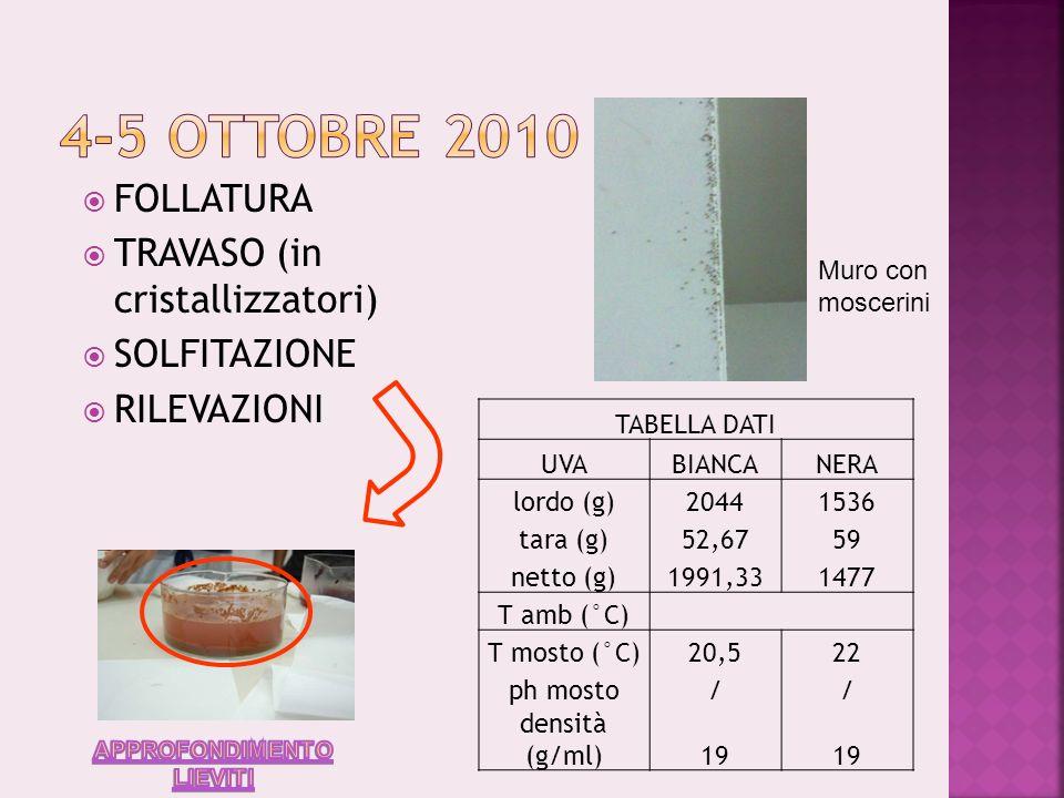 Presenza di drosophile (moscerino della frutta) Fermentazione: C 6 H 12 O 6 2CH 3 CH 2 OH + 2CO 2 + Calore FOLLATURA: si rimescola il mosto per permettere lossigenazione ed evitare che la sua temperatura si elevi eccessivamente SOLFITAZIONE (1g di solfito di potassio su 1kg di mosto): evita che il colore del mosto si alteri e impedisce il proliferare di batteri Travaso in cristallizzatori