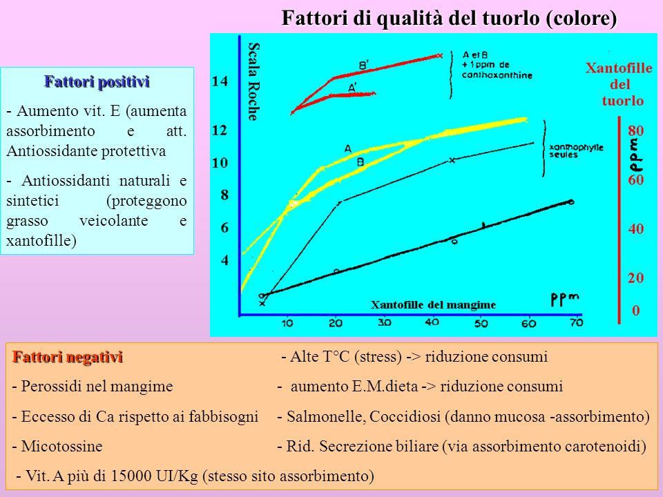 24 Fattori positivi - Aumento vit. E (aumenta assorbimento e att. Antiossidante protettiva - Antiossidanti naturali e sintetici (proteggono grasso vei