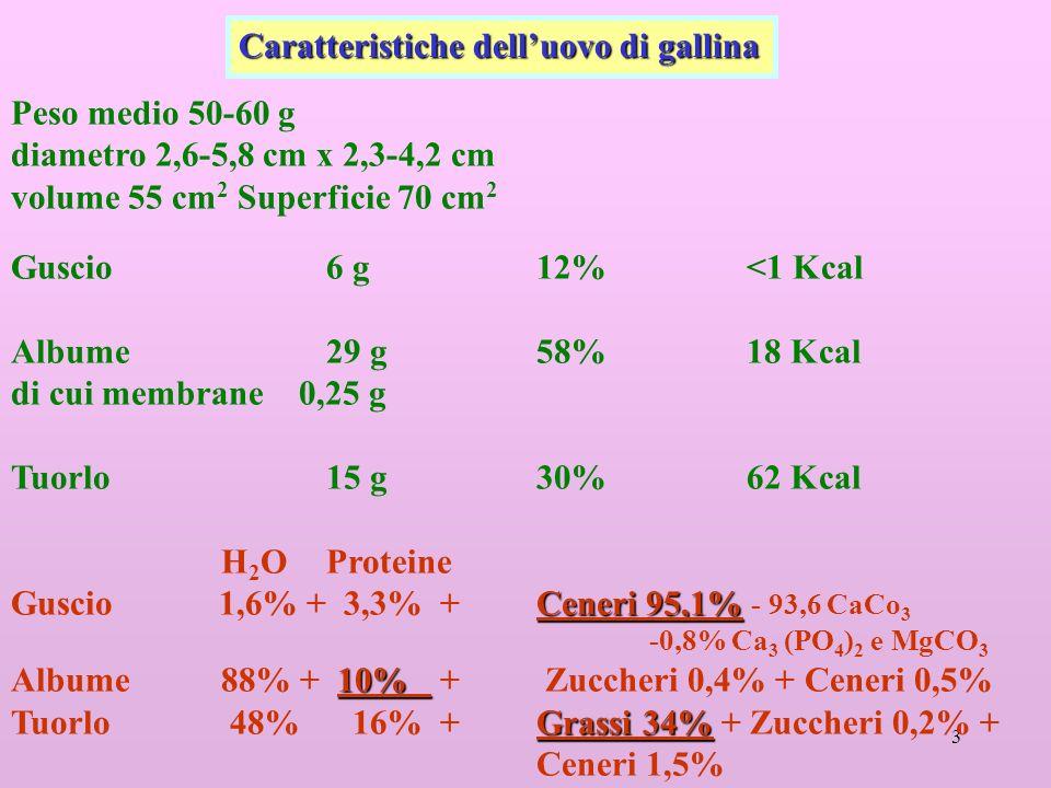 3 Peso medio 50-60 g diametro 2,6-5,8 cm x 2,3-4,2 cm volume 55 cm 2 Superficie 70 cm 2 Guscio6 g12% <1 Kcal Albume29 g58%18 Kcal di cui membrane 0,25 g Tuorlo15 g30%62 Kcal H 2 OProteine Ceneri 95,1% Guscio 1,6% + 3,3% +Ceneri 95,1% - 93,6 CaCo 3 -0,8% Ca 3 (PO 4 ) 2 e MgCO 3 10% Albume88% + 10% + Zuccheri 0,4% + Ceneri 0,5% Grassi 34% Tuorlo 48% 16% + Grassi 34% + Zuccheri 0,2% + Ceneri 1,5% Caratteristiche delluovo di gallina