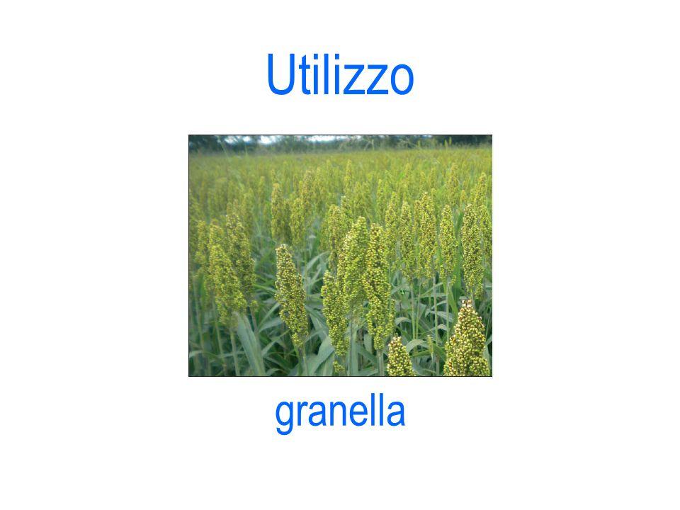 Utilizzo granella