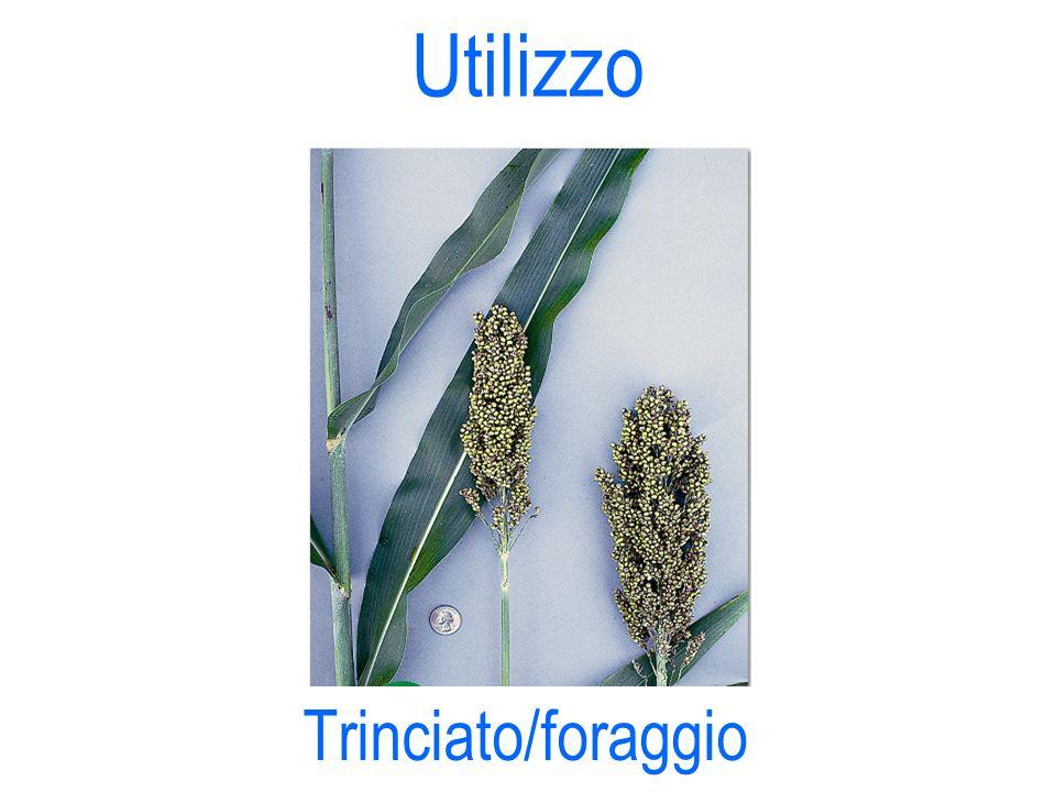 Utilizzo Trinciato/foraggio