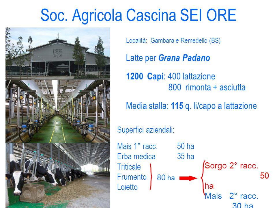 Soc. Agricola Cascina SEI ORE Località: Gambara e Remedello (BS) Latte per Grana Padano 1200 Capi : 400 lattazione 800 rimonta + asciutta Media stalla