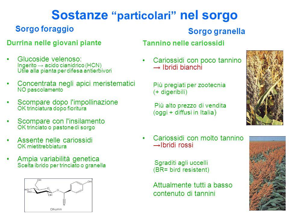 Durrina nelle giovani piante Glucoside velenoso: Ingerito acido cianidrico (HCN) Utile alla pianta per difesa antierbivori Concentrata negli apici mer