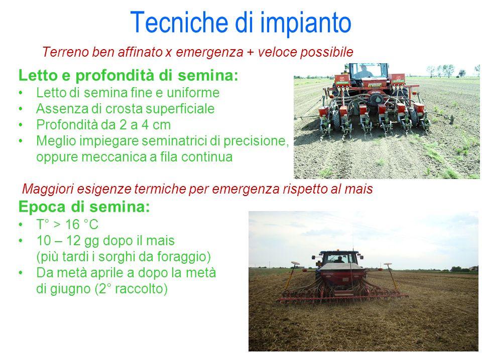 Tecniche di impianto Terreno ben affinato x emergenza + veloce possibile Letto e profondità di semina: Letto di semina fine e uniforme Assenza di cros