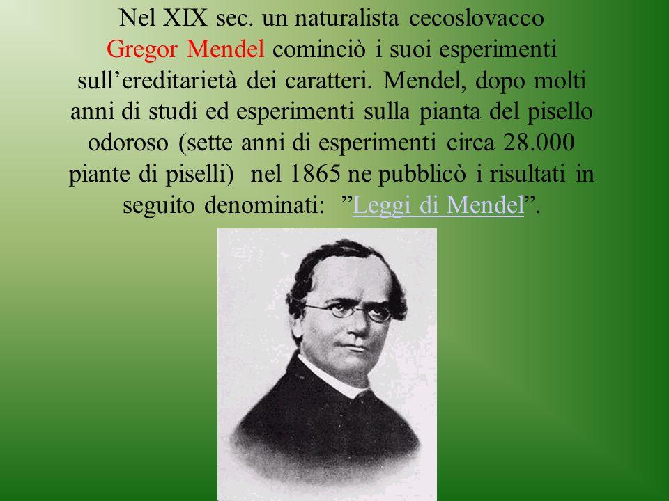 Nel XIX sec. un naturalista cecoslovacco Gregor Mendel cominciò i suoi esperimenti sullereditarietà dei caratteri. Mendel, dopo molti anni di studi ed