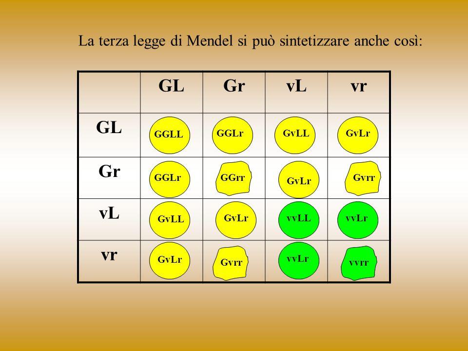 La terza legge di Mendel si può sintetizzare anche così: GLGrvLvr GL Gr vL vr GGLL GGLrGvLLGvLr GGLrGGrr GvLr Gvrr GvLL GvLrvvLLvvLr GvLr Gvrr vvLr vv