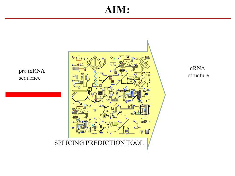 AIM: SPLICING PREDICTION TOOL pre mRNA sequence mRNA structure