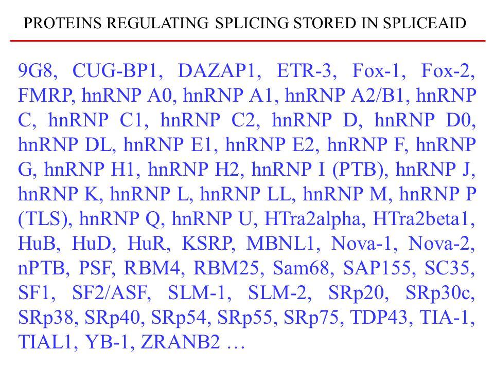 9G8, CUG-BP1, DAZAP1, ETR-3, Fox-1, Fox-2, FMRP, hnRNP A0, hnRNP A1, hnRNP A2/B1, hnRNP C, hnRNP C1, hnRNP C2, hnRNP D, hnRNP D0, hnRNP DL, hnRNP E1,