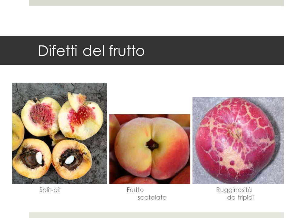 Difetti del frutto Split-pitRugginosità da tripidi Frutto scatolato