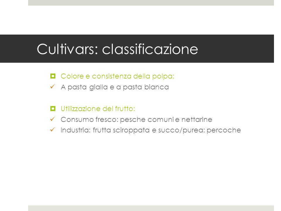 Cultivars: classificazione Colore e consistenza della polpa: A pasta gialla e a pasta bianca Utilizzazione del frutto: Consumo fresco: pesche comuni e