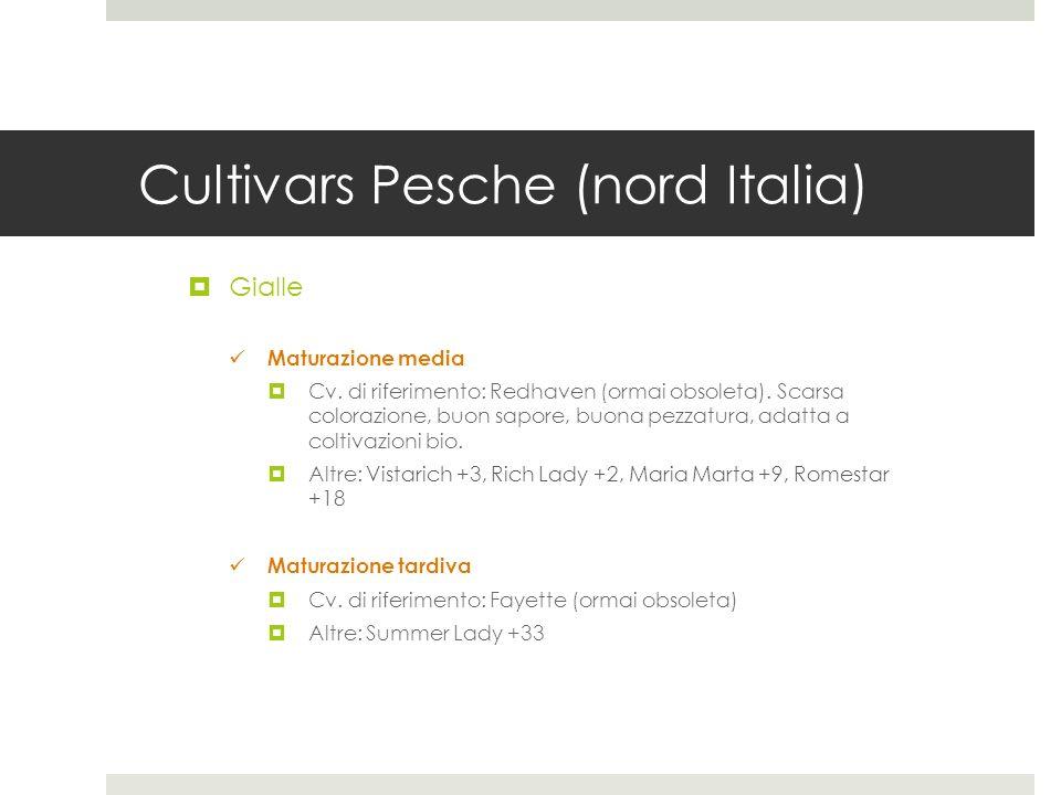 Cultivars Pesche (nord Italia) Gialle Maturazione media Cv. di riferimento: Redhaven (ormai obsoleta). Scarsa colorazione, buon sapore, buona pezzatur