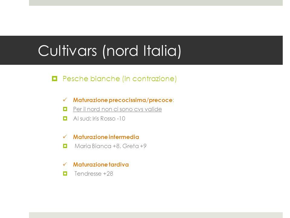 Cultivars (nord Italia) Pesche bianche (in contrazione) Maturazione precocissima/precoce : Per il nord non ci sono cvs valide Al sud: Iris Rosso -10 M