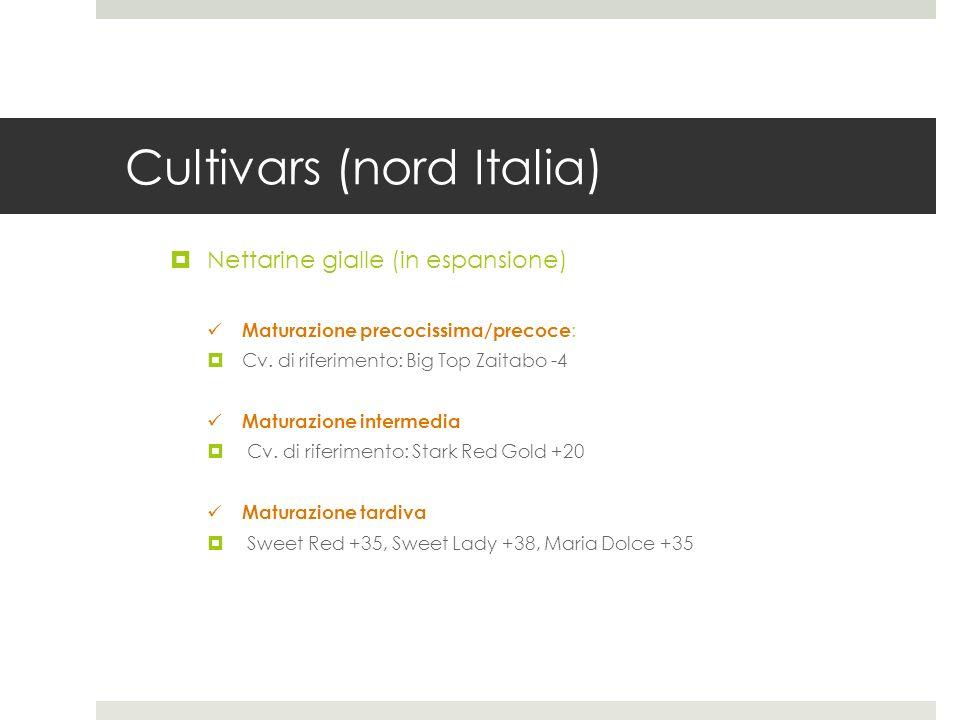 Cultivars (nord Italia) Nettarine gialle (in espansione) Maturazione precocissima/precoce : Cv. di riferimento: Big Top Zaitabo -4 Maturazione interme
