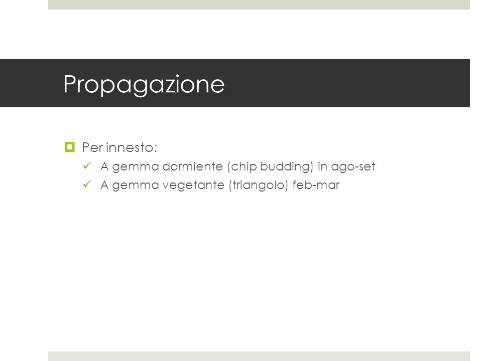 Propagazione Per innesto: A gemma dormiente (chip budding) in ago-set A gemma vegetante (triangolo) feb-mar