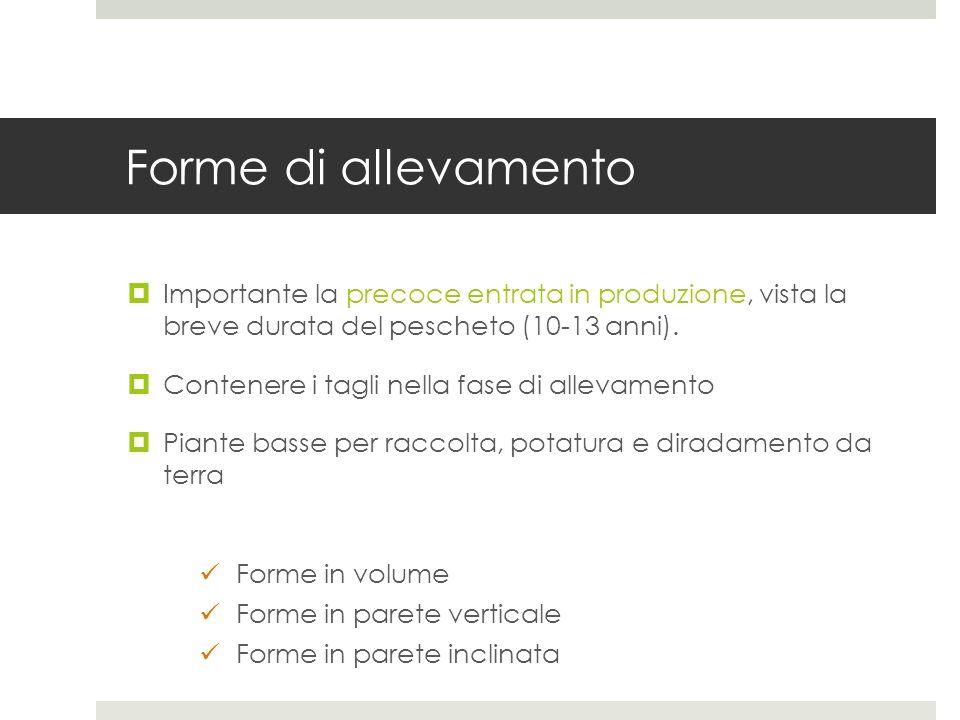 Forme di allevamento Importante la precoce entrata in produzione, vista la breve durata del pescheto (10-13 anni). Contenere i tagli nella fase di all