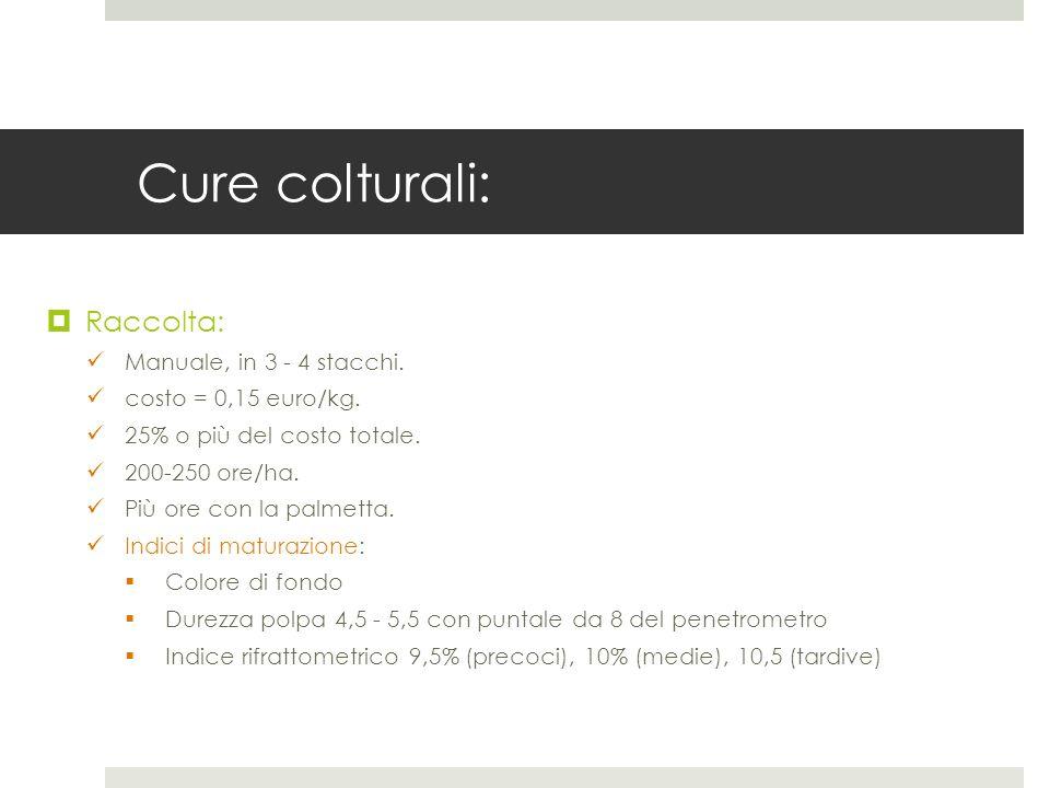 Cure colturali: Raccolta: Manuale, in 3 - 4 stacchi. costo = 0,15 euro/kg. 25% o più del costo totale. 200-250 ore/ha. Più ore con la palmetta. Indici